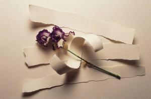 no flowers2
